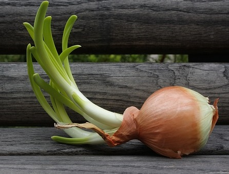 onion - Regrow your own food